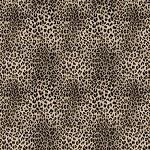 Agile Cheetah(des)