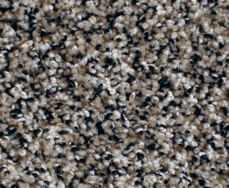 Phenix Carpet Anchor Bay At Wholesale Prices Warehouse