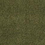 00312 mossy bark