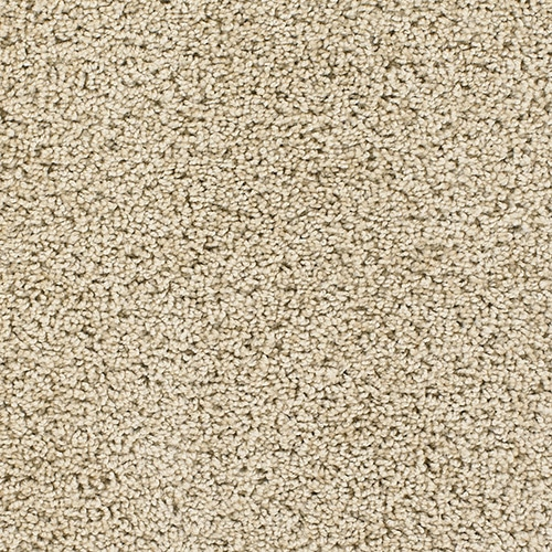 Dream Weaver Carpet Talk Of The Town