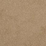 Wood Thrush - 35654