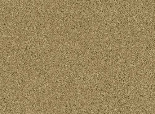 Wholesale Prices On Beaulieu Carpet Velvet Warehouse Carpets