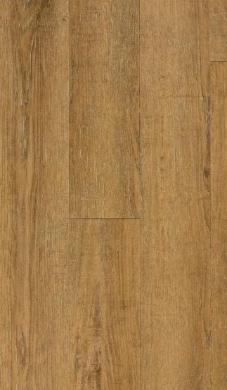 50LVP213 kennebec oak