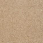 sand dollar 00183