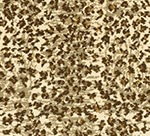 CAPE-TOWN-COLLECTION_CB79-0001_CHEETAH