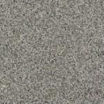 latest trend bashful gray