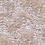 Paradise by Woolshire Carpet paradise conch