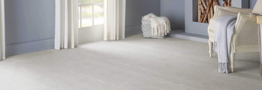 hagaman carpet velvet chic feat img